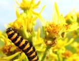 Auswahl_Schmetterling-Blume.jpg